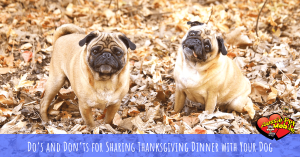 Do's And Don'ts For Sharing Thanksgiving Dinner With Your Dog